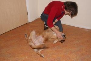 dierenartsmet hond