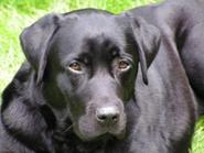 Hond Mariet