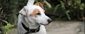 Problemen bij ouder wordende hond